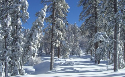 This could be our year for record snow….