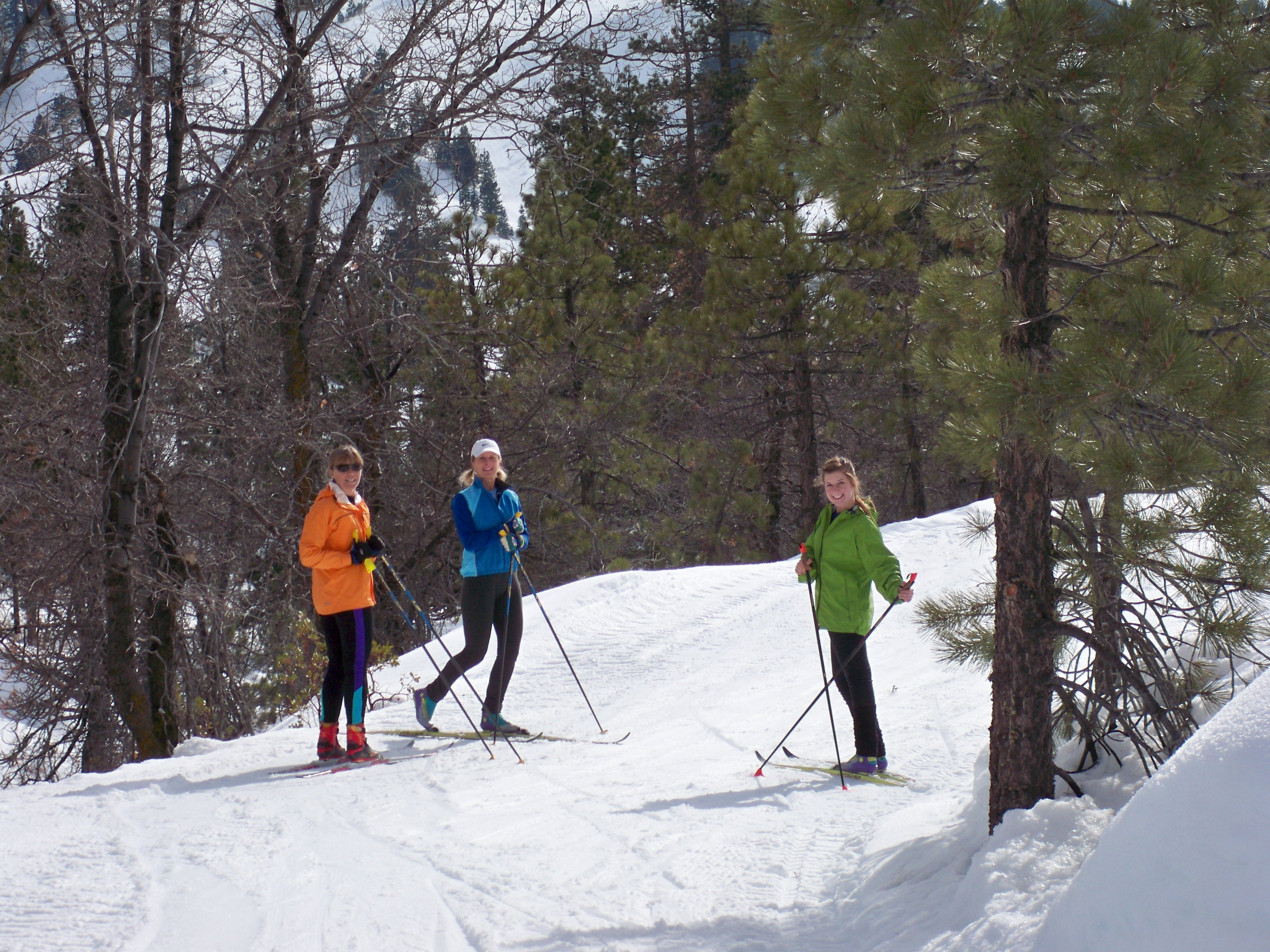 Cross Country Skiers On The Trail